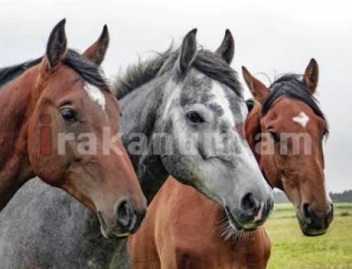 Մրգանուշի բնակիչը ձիեր է գողացել ու մորթել