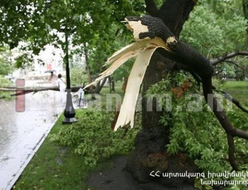 Փրկարարները ծառը հեռացրել են ճանապարհի երթևեկելի հատվածից