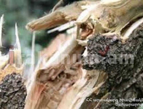 Գյումրիում բարդին ընկել է տնակի և ավտոտնակի վրա