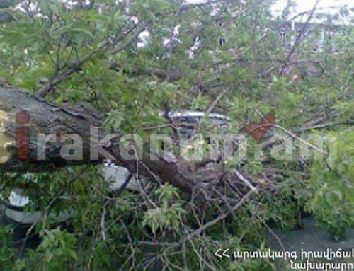 Ծառն ընկել է ճանապարհի երթևեկելի հատված՝ այն դարձնելով միակողմանի երթևեկելի