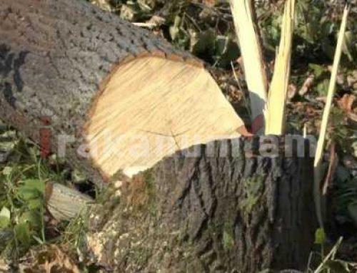 Բացահայտվել են անտառապահների կողմից խոշոր կաշառքներ ստանալու, ապօրինի ծառահատումներ կատարելու բազմաթիվ դեպքեր