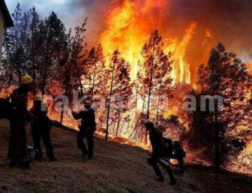 Կալիֆորնիայում անտառային հրդեհների արդյունքում այրվել է շուրջ 810 հազար հա տարածք