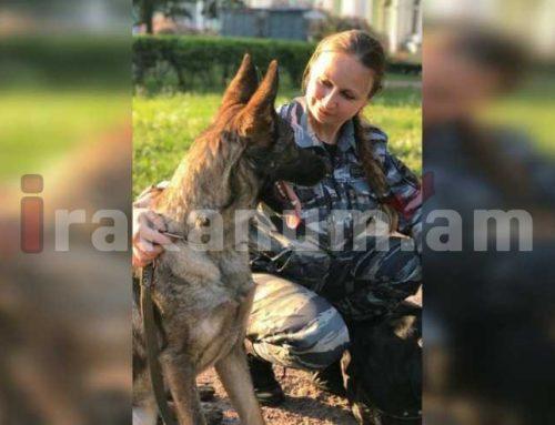 Շունը փրկել է 15-ամյա աղջկան բռնաբարությունից