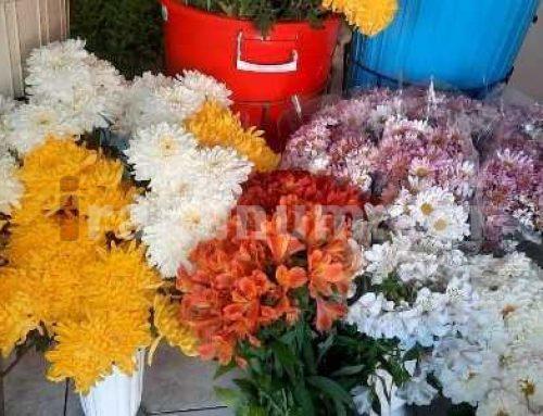 Հաճախորդը խանութներով շրջեց ու դատարկ գնաց գերեզմանոց․ ըստ վերավաճառողների՝ ջերմոցատերերն են թանկացրել ծաղիկները