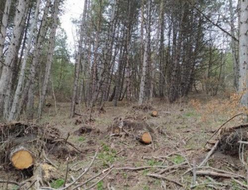 «Դիլիջան» ազգային պարկի տարածքում արձանագրվել է 46 տարբեր ծառերի հատված կոճղ․բուսական աշխարհին պատճառված վնասը կազմել է 1 375 205 ՀՀ դրամ