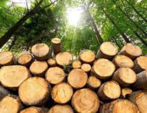 Հրազդանում 32-ամյա քաղաքացին ապօրինի հատել է տարբեր տեսակի և տրամագծի 37 ծառ