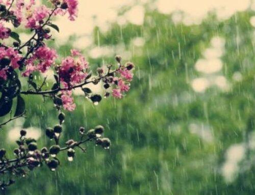Առաջաիկա օրերի Երևանում և որոշ մարզերում սպասվում է կարճատև անձրև