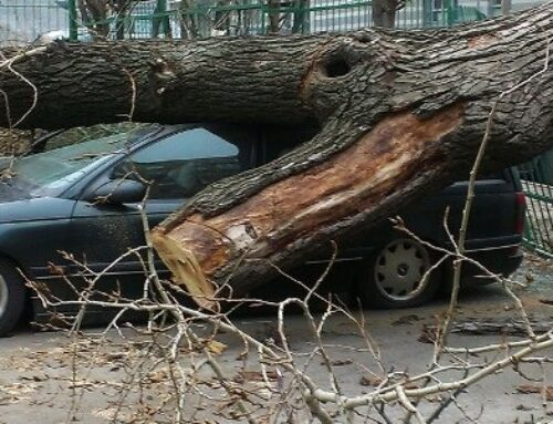 Մոսկվայում փոթորկից տապալված ծառերից տասնյակ մեքենաներ են վնասվել