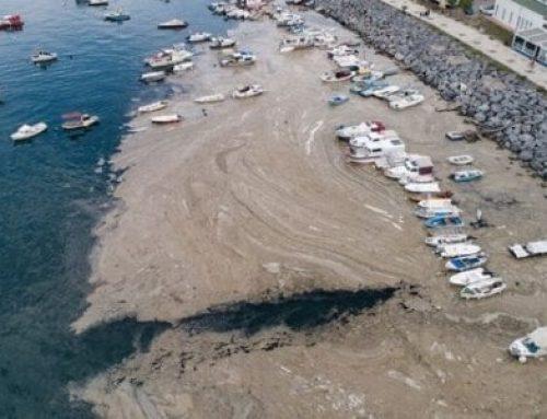 Թուրքիան ավելի քան 5.5 հազար խորանարդ մետր ծովային լորձ է հեռացրել Մարմարա ծովից