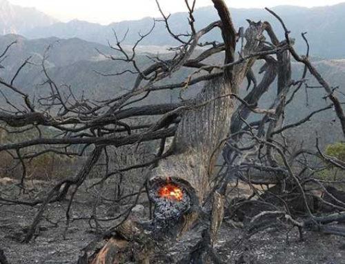 «Արևիկ» ազգային պարկի տարածքում վերսկսվել են հրդեհաշիջման աշխատանքները. մասնակցում է 86 փրկարար