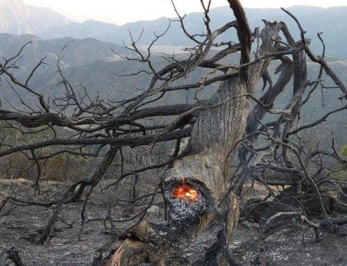 Հրդեհ Նոր Երզնկա գյուղում